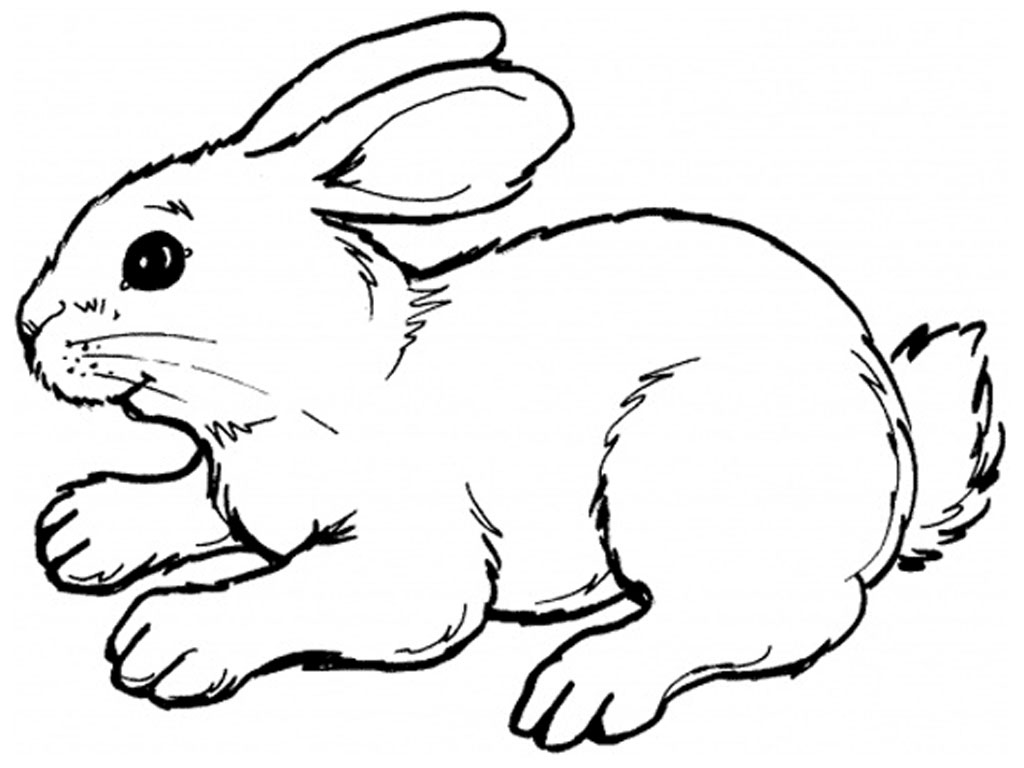 rabbit-drawing-clipart-1
